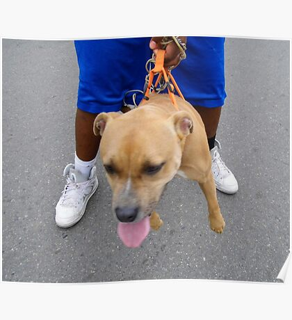 Dogz In The Hood    Pillow Tote Poster