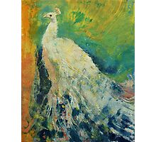 White Peacock Photographic Print
