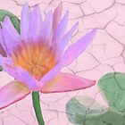 Pink Water Lily Art by Rosalie Scanlon