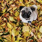 Pug with Autumn Leaves by boodapug