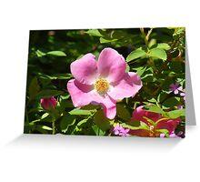 Garden Flower Greeting Card