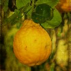 Fruit Of The Lemon Tree by MotherNature