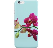 Pink Orchid, Blue Phone Case iPhone Case/Skin