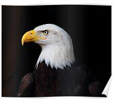 Bald Eagle, Poster