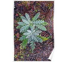 Prickle on frosty winter morning, The Gorge, Launceston, Tasmania Poster