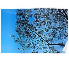 Silhouette of winter tree at The Gorge, Launceston, Tasmania Poster