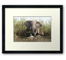 Disrupted Dinner created an Enraged Elephant  Framed Print