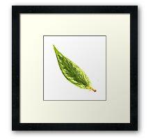 Little Leaf Framed Print