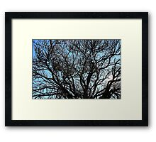 Winters tree, Hill End. Framed Print