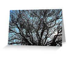 Winters tree, Hill End. Greeting Card