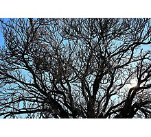 Winters tree, Hill End. Photographic Print