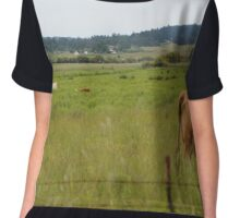Cows in a field Chiffon Top