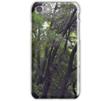 Forest background with many trees tops with green leaves. iPhone Case/Skin