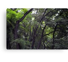 Forest background with many trees tops with green leaves. Canvas Print