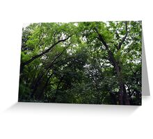 Forest background with many trees tops with green leaves. Greeting Card
