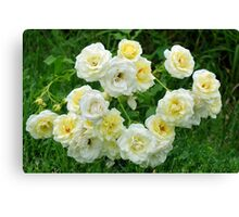 White roses in the garden. Canvas Print
