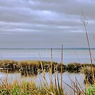 On the Banks of the Currituck Sound by WeeZie