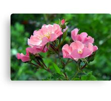 Pink small flowers, natural background. Canvas Print