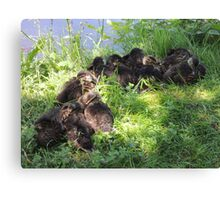 Feathered Huddle Canvas Print