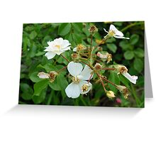 Small white delicate flowers and green leaves. Greeting Card