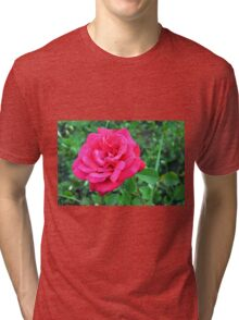 Pink rose and green leaves, natural background. Tri-blend T-Shirt