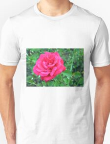 Pink rose and green leaves, natural background. Unisex T-Shirt
