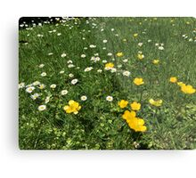 Yellow And White Daisies Metal Print