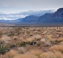 Blue Mountain Landscape in the Desert Southwest by NoblePhotosCard