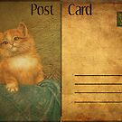 Post Card - cat by © Kira Bodensted