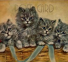 Post Card - kittens by © Kira Bodensted