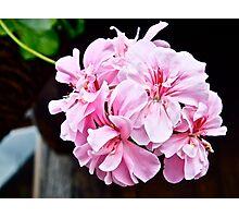 Floral (1) Photographic Print
