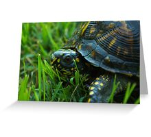 Da Backyard turtle Greeting Card