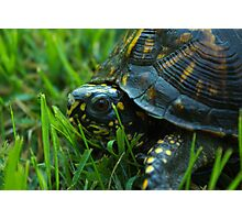 Da Backyard turtle Photographic Print