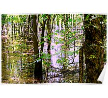 Swamp Waters Poster