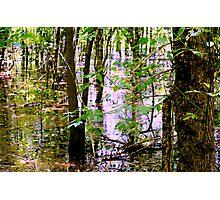 Swamp Waters Photographic Print