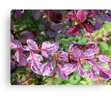 Red Rover Canvas Print