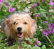 Dog in purple flowers by GreyFeatherPhot