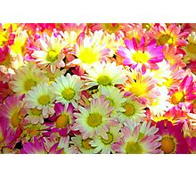 yellow/pink flowers Photographic Print