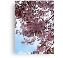 Blossom and Sky Canvas Print