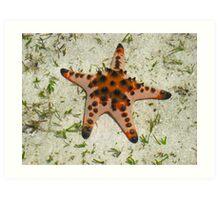Orange starfish, Mabul Island, Phillipines Art Print