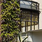 Gardening Delights - Wisteria, Aloe Vera and a Stained Glass Canopy - Right by Georgia Mizuleva