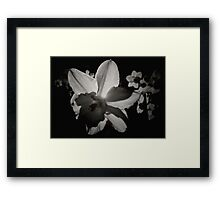 Daffodil in the Dark II Framed Print