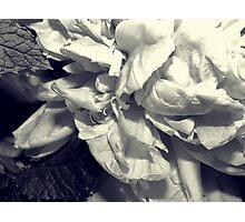 Mint Peony Photographic Print