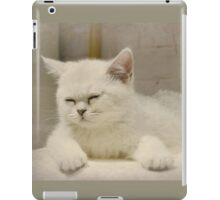 Beijing Kitten iPad Case/Skin