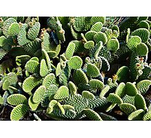 Field of Cactus Paddles  Photographic Print