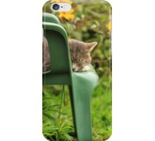 Grey cat in garden with yellow flowers iPhone Case/Skin