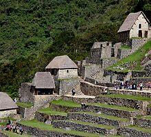Machu Picchu Terraces by phil decocco
