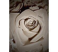 Vanilla Roses Photographic Print