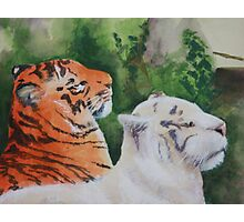 Regal Pair Photographic Print