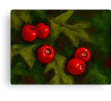 Hawthorn Berries in Oil Pastel, Red and Green, Christmas Canvas Print